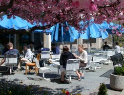 Students dining outdoors. Photo courtesy of Office of Communications.