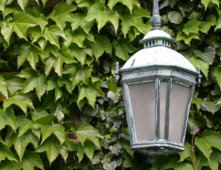 Photo of ivy and lamp